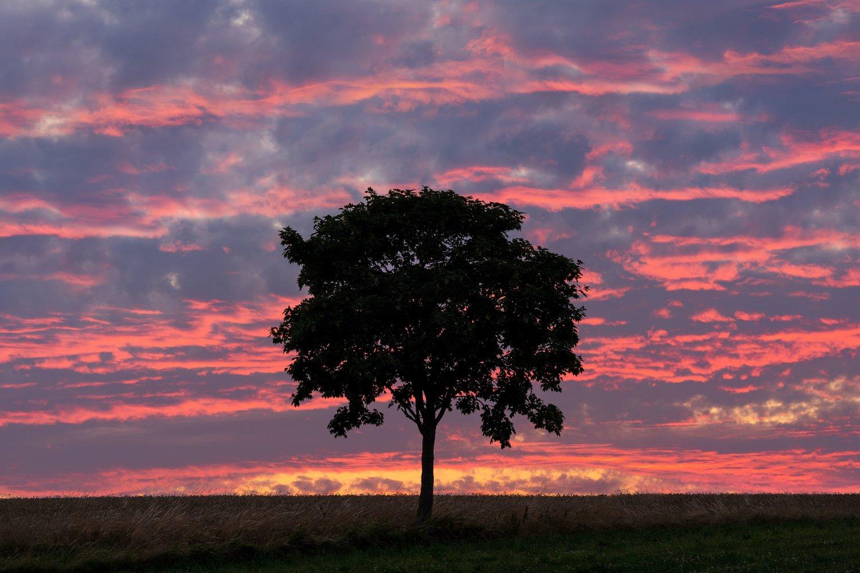quando un teleobiettivo è meglio di un grandangolo nella foto di paesaggio - albero isolato